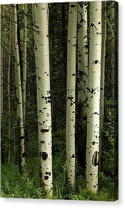 Canvas Print featuring the photograph Colors And Texture Of A Forest Portrait by James BO Insogna