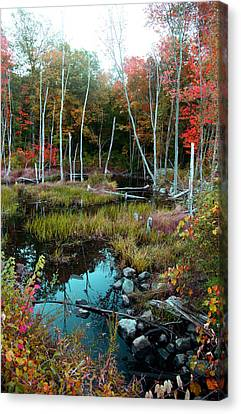 Colors By The Stream Canvas Print by Joseph G Holland