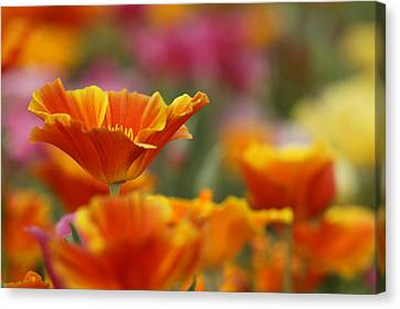 Colors Canvas Print by Eggers Photography