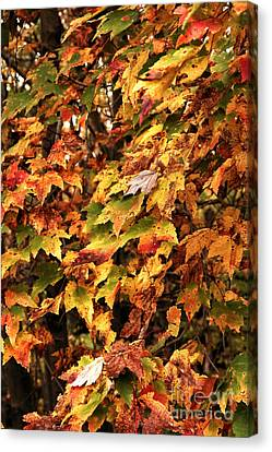 Colors Of Autumn Canvas Print by John Rizzuto