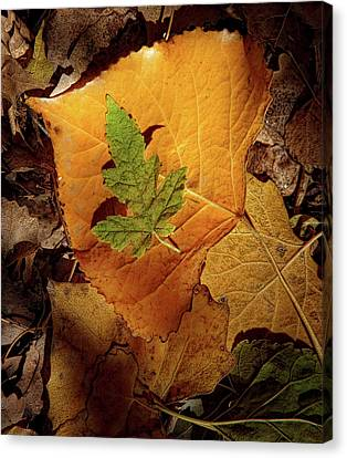 Canvas Print featuring the photograph Colors Of Autumn by Marie Leslie