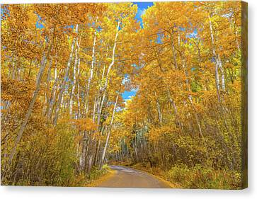 Scenic Drive Canvas Print - Colors Of Fall by Darren White