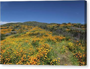 Canvas Print featuring the photograph Colors Of Springtime by Cliff Wassmann