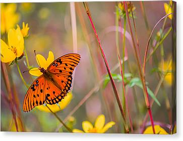 Colors Of Summer Canvas Print by Parker Cunningham
