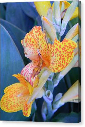 Colors Of The Canna Lily Canvas Print by Warren Thompson