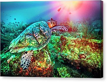 Sea Anenome Canvas Print - Colors Of The Sea In Lights by Debra and Dave Vanderlaan