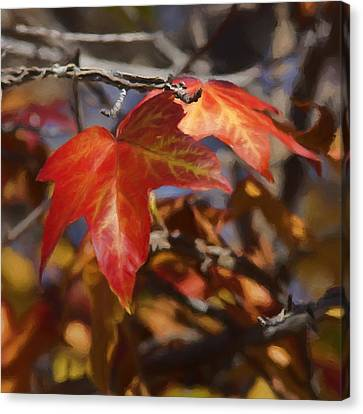 Colors Of The Sycamore Canvas Print by Ernie Echols