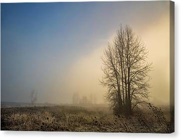 Foggy Day Canvas Print - Colors Of Winter Sunrise by Kunal Mehra