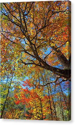 Colors On High Canvas Print by John M Bailey