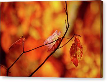 Canvas Print featuring the photograph Colors by Robert Geary