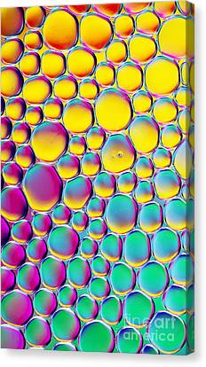 Colour Full Canvas Print by Tim Gainey