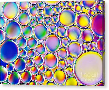 Colour Me Crazy Canvas Print by Tim Gainey