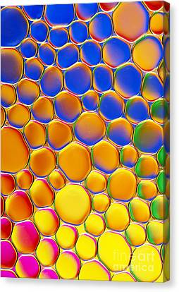 Colour Me Happy Canvas Print by Tim Gainey