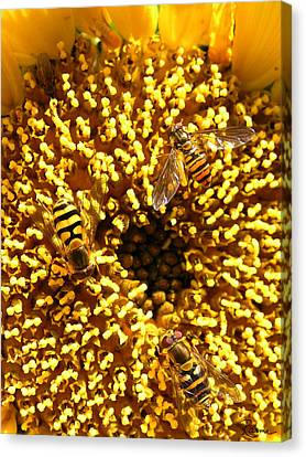 Colour Of Honey Canvas Print