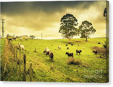Colourful Australian Cattle Station Canvas Print by Jorgo Photography - Wall Art Gallery