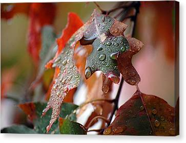 Colours Of Fall I Canvas Print by Robert Meanor