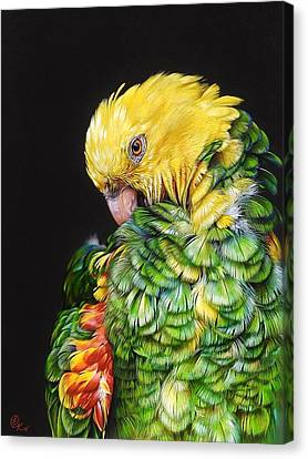 Colours Of The Jungle - Yellow-headed Amazon Canvas Print by Elena Kolotusha