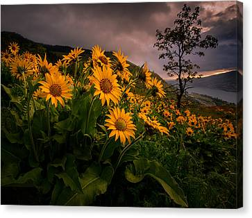 Canvas Print featuring the photograph Columbia Gorge Joy by Dan Mihai