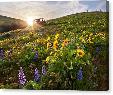 Columbia Hills Wildflowers Canvas Print