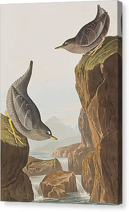 Columbian Water Ouzel Or Arctic Water Ouzel Canvas Print by John James Audubon