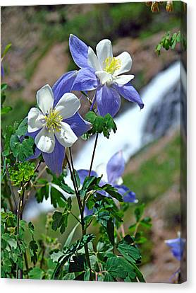 Columbine 3 Canvas Print