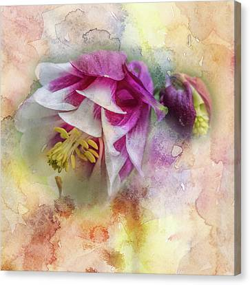 Columbine Blossom In Magenta And White #1 Canvas Print by Mother Nature