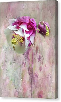 Columbine Blossom In Magenta And White Canvas Print by Mother Nature