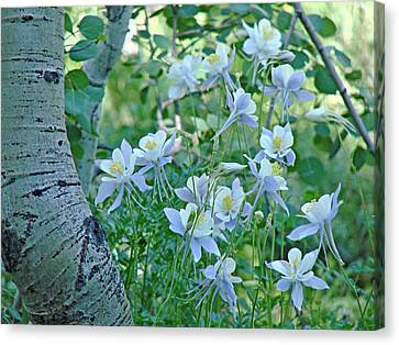 Columbine Meadow Canvas Print