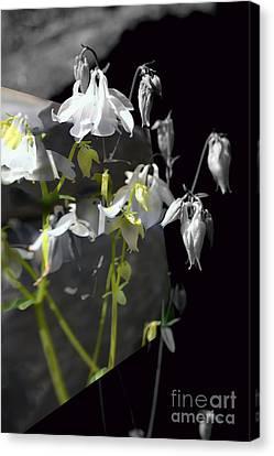 Columbine Shades Of Grey Canvas Print by Elaine Hunter
