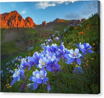 Columbine Sunrise Canvas Print