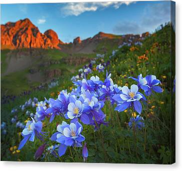 Canvas Print featuring the photograph Columbine Sunrise by Darren White