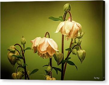 Columbines In Summer Canvas Print by Skip Tribby