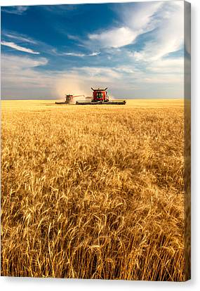 Combines Cutting Wheat Canvas Print by Todd Klassy