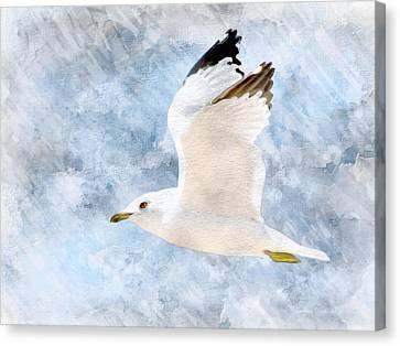 Flying Seagull Canvas Print - Come Fly With Me by Barbara Chichester