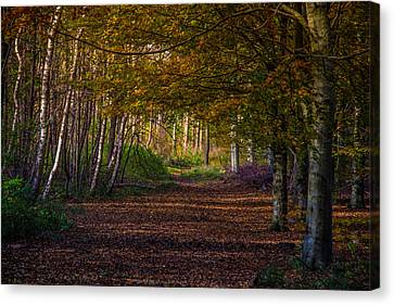 Canvas Print featuring the photograph Comfort In These Woods by Odd Jeppesen