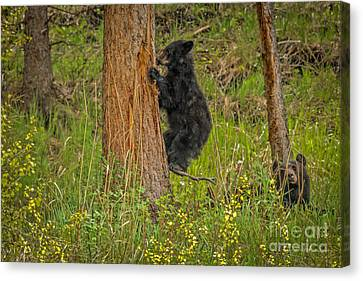 Survive Canvas Print - Coming Down by Robert Bales