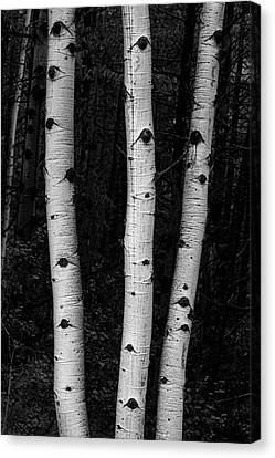 Canvas Print featuring the photograph Coming Out Of Darkness by James BO Insogna