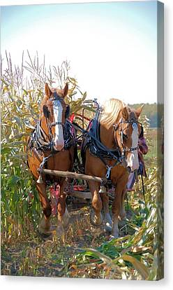 Coming Through The Corn Canvas Print by Valerie Kirkwood