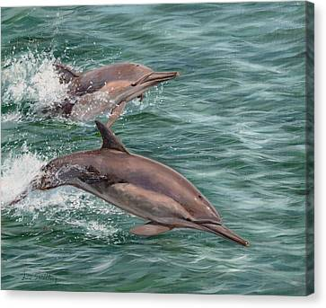 Dolphin Canvas Print - Common Dolphins by David Stribbling