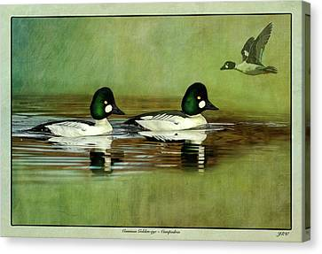 Common Golden-eye Drakes With Flyer Canvas Print