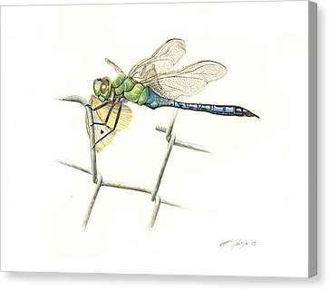 Common Green Darner Canvas Print by Logan Parsons