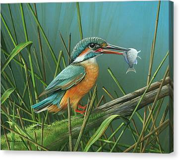 Common Kingfisher Canvas Print by Mike Brown