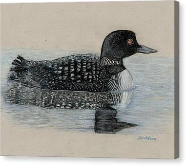 Common Loon Canvas Print by Cynthia  Lanka