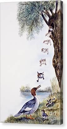Common Merganser Or Goosander Chicks  Canvas Print by Unknown
