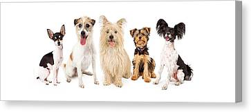 Common Small Breed Dogs Canvas Print by Susan Schmitz
