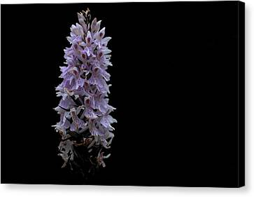 Common Spotted Orchid Canvas Print by Keith Elliott