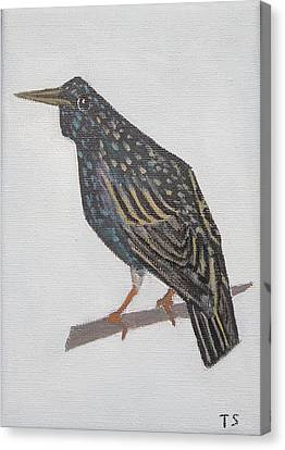 Common Starling Canvas Print