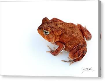 Common Yard Toad Canvas Print by Melissa Wyatt