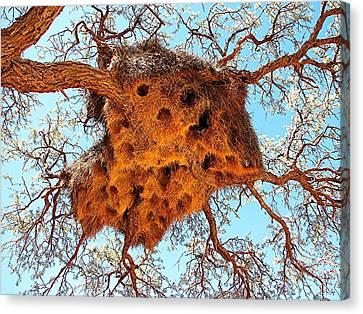 Community Weaver's Nest Canvas Print