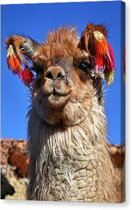 Canvas Print featuring the photograph Como Se Llama by Skip Hunt